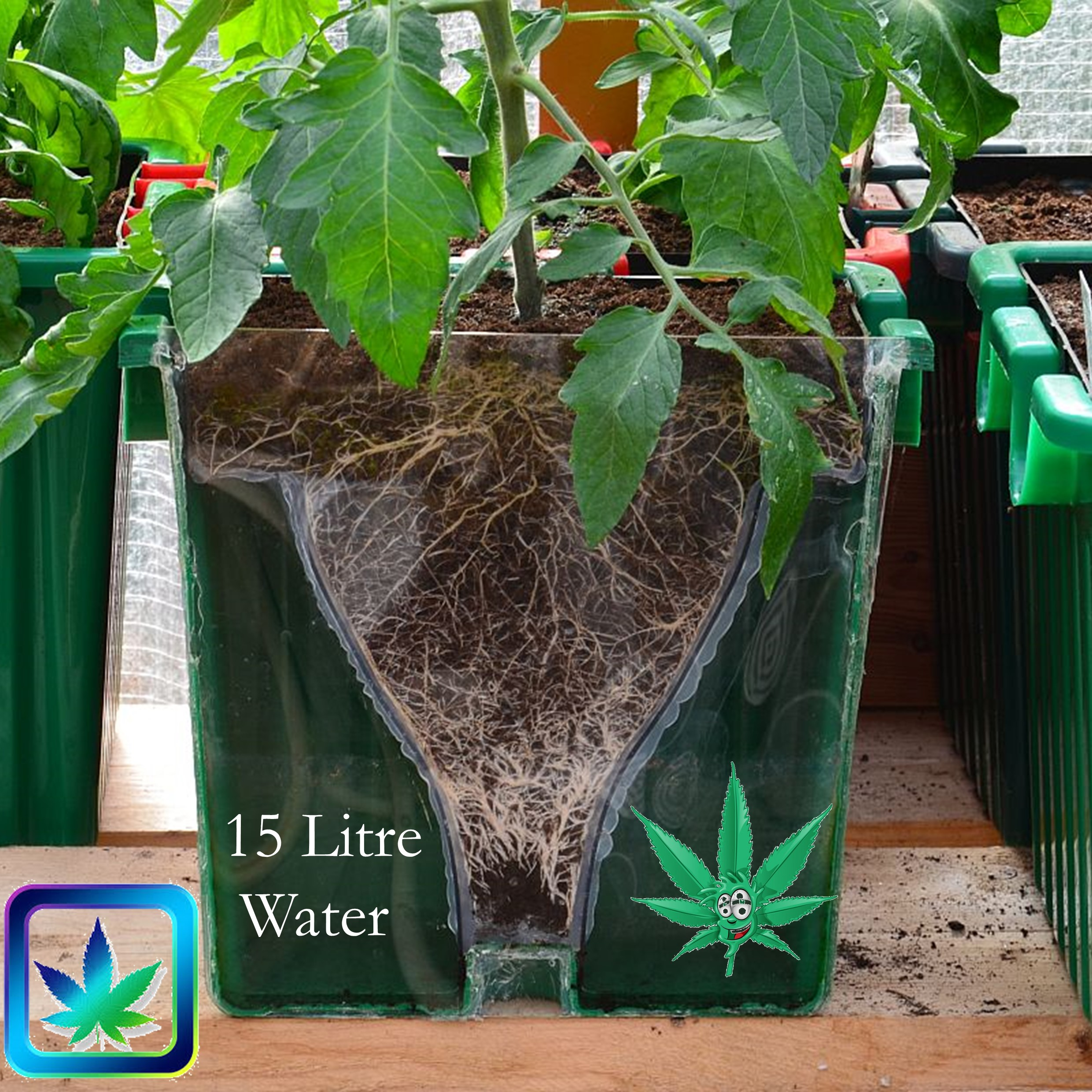 420 Grow Pot with see through side